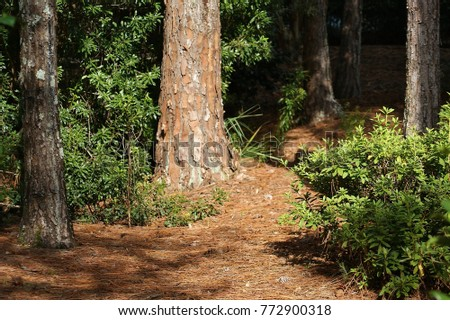 View of the bed of a forest with trees and plants,