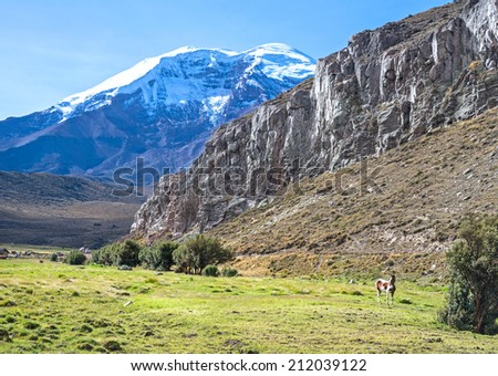 View of the Chimborazo volcano on a sunny morning, with a horse in the foreground - stock photo