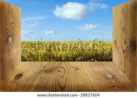 view of the growth field - stock photo