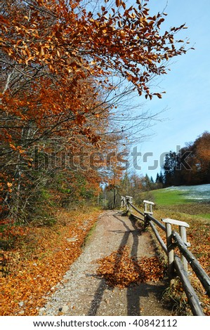view of the landscape  Polish golden autumn in the forest by Pieniny