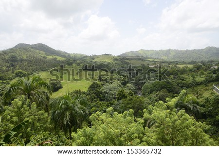 view of the lush green vegetation and palm trees growing in the mountains in the Dominican Republic - stock photo