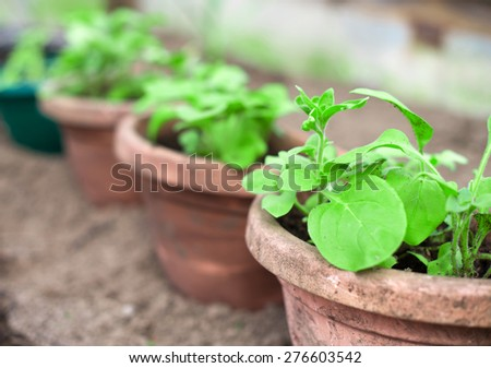 View of the many pots with seedlings. - stock photo