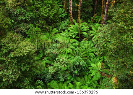 View of the Rainforest floor in rain from the Tree Top Walk of  Otway Fly up to 30 meters above ground level,Great Ocean Road, Australia - stock photo