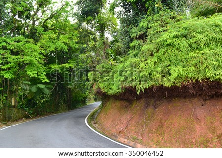 View of the road through the jungle or rain forest in Puerto Rico. USA - stock photo