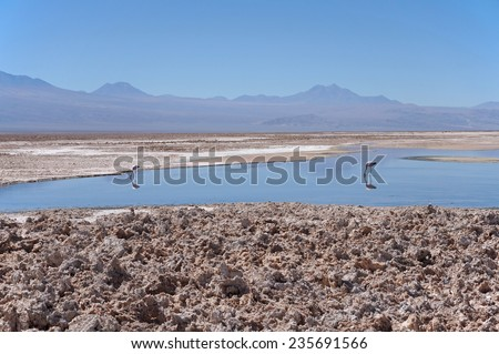 View of the Salar de Atacama, the largest salt flat in Chile and Reserve flamingos - stock photo