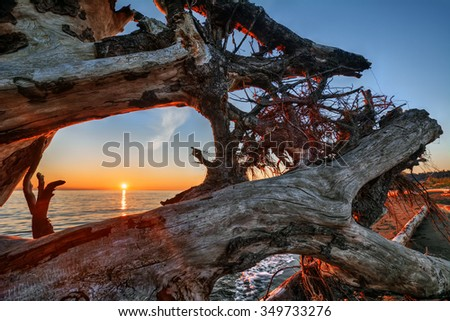 View of the sunset, through tangled roots and branches - stock photo