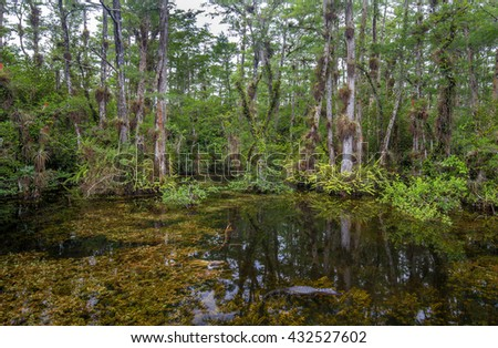 view of the Sweetwater Strand in the Big Cypress National Preserve. A strand is a natural channel in the landscape to drain the water from the surrounding higher flat land.