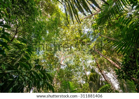 View of the thick lush green canopy of the Amazon rainforest near Iquitos, Peru - stock photo