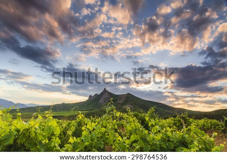 View of the vineyards and mountains in the background of the sunset. - stock photo