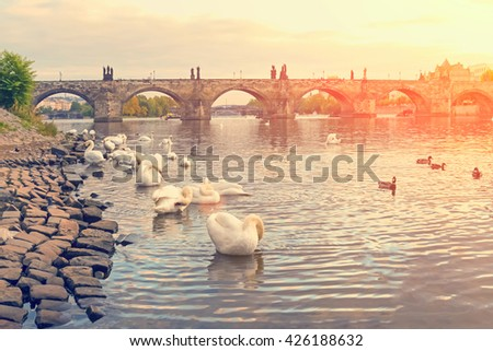 View of the white swans and ducks in the water, the stone bridge, buildings and trees. Toned - stock photo