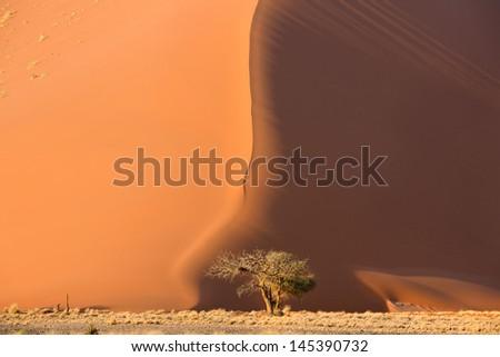 View of tree near dune in Sossusvlei park of Namibia  - stock photo