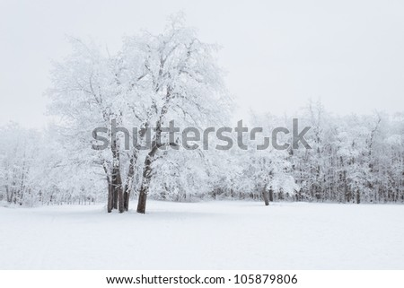 View of Trees Covered by Snow - stock photo
