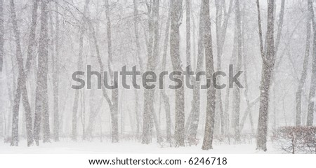 View of trees during snowing. Snow winter scene. - stock photo