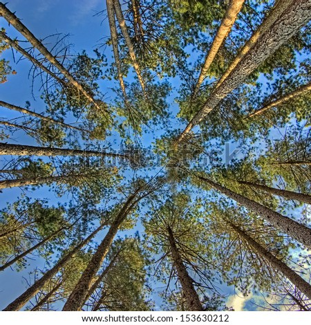 view of trees from below - stock photo