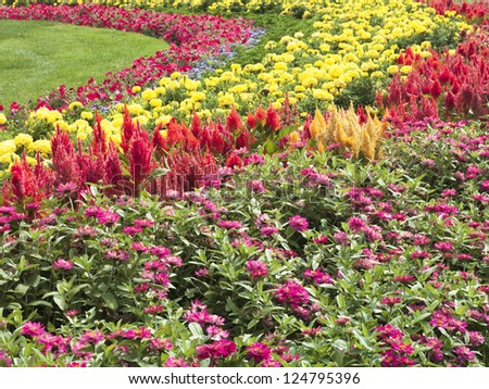 View of variety of colorful flowers.