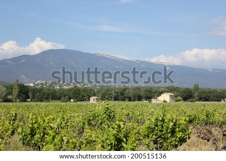 View of Ventoux Mount, from vineyard of Caromb village, Vaucluse, Provence, France