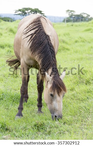 view of young horse feeding on pasture