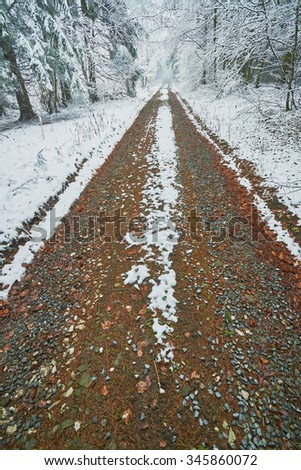 View on a forest road in late autumn - stock photo