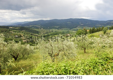 View on a valley in Tuscany with a olive grove on the hills