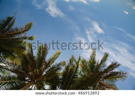 view on the sky through palm trees