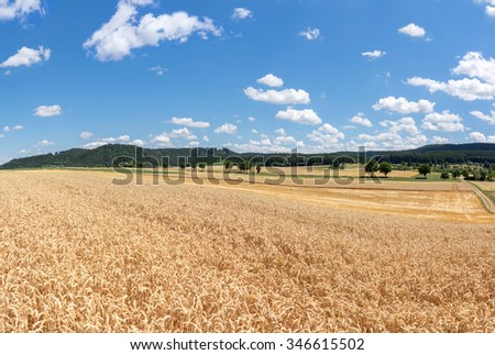 View over a field with ripe wheat in rural landscape against blue and white sky  - stock photo