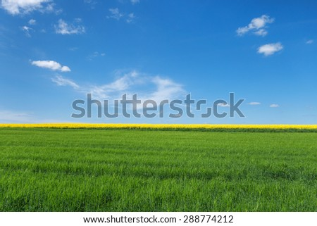 View over a young, green cornfield with a behind yellow blooming rape field. To this a blue sky with small white clouds.  - stock photo