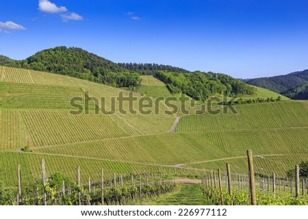 View over green verdant vineyard landscape on a sunny summer day  - stock photo