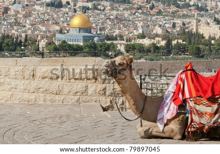 View over the Temple Mound in Jerusalem, showing The Dome of the rock with a camel in foreground - stock photo