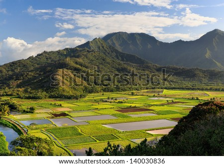 View overlooking the taro fields on Kauai, Hawaii - stock photo