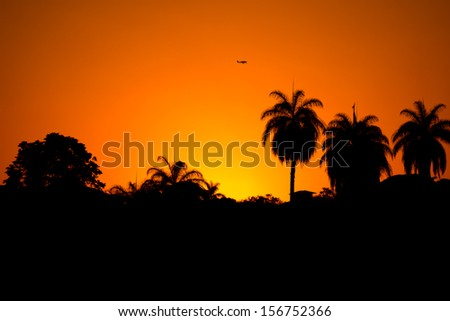 View silhouetted of palm trees and an air plane - stock photo