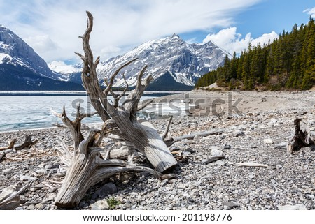 View through driftwood at Upperlake Canada. - stock photo