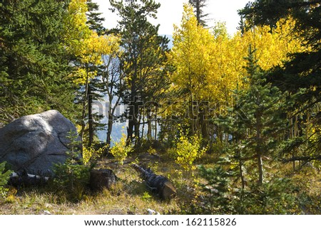 View through yellow autumn aspens to open space and distant hillside beyond - stock photo