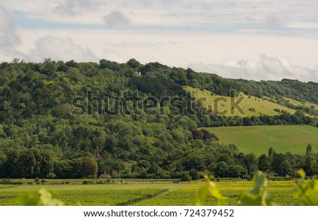 View to Box Hill from valley below. Dorking, Surrey, England. With vineyard in foreground.