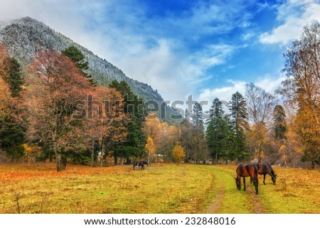 View to horses near snow covered colorful foothills of caucasus mountains in autumn, Arkhyz, Karachay-Cherkessia, Russia