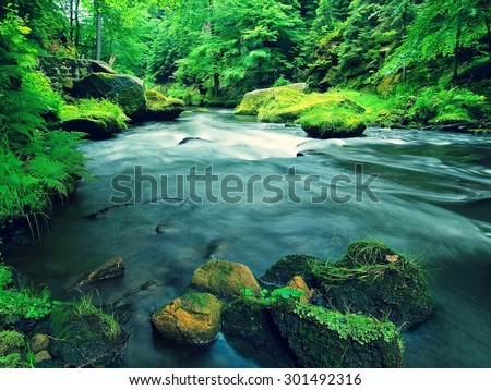 View to mountain stream in sandstone gulch and below green branches of acacias, beeches and oaks. Water level makes green reflections. The end of summer at mountain river.  - stock photo