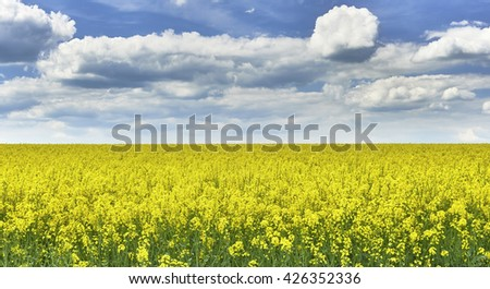 View to rape field with a blue sky with clouds - stock photo