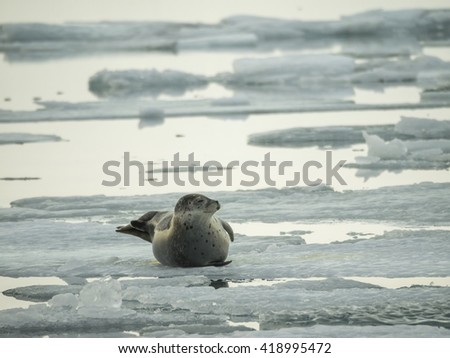Views around a black sand glacier beach and glacier lagoon  Iceland, Northern Europe in winter with snow and ice