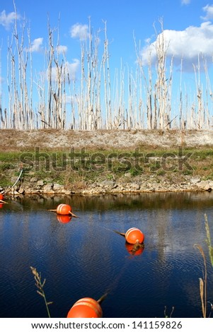 Views from the Everglades (Deforestation of the Florida Everglades) - stock photo