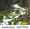 Views of moss covered stream bed at Karst Springs in Peter Lougheed Provincial Park, Kananaskis Country Alberta, Canada - stock photo