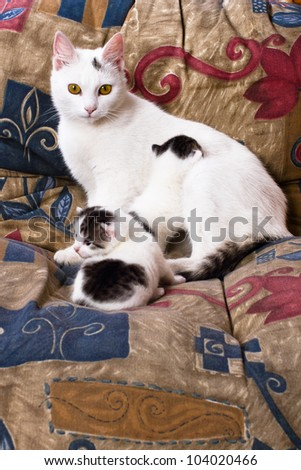 vigilant in guarding their kittens cat on a pillow in a chair - stock photo