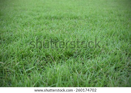 vignette of natural green grass field used for background - stock photo