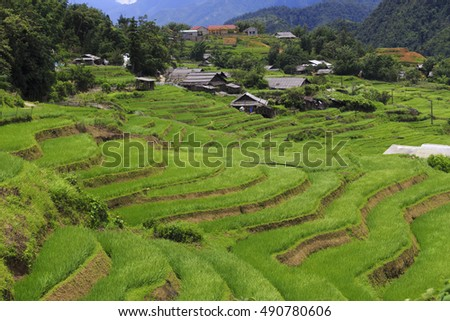 village and rice field