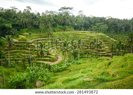Village of Tegallalang, Beautiful rice terrace in Bali, Indonesia - stock photo