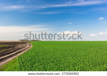 Village road under blue sky with green field of corn - stock photo