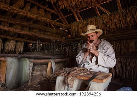 VINALES, CUBA - MARCH 02: Unidentified farmer shows how to prepare a cigar from tobacco leaves in Vinales, on March 02, 2011. Cuba has the second largest area planted with tobacco in the world..    - stock photo