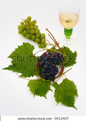 Vine glass and young grape vine branch in early summer