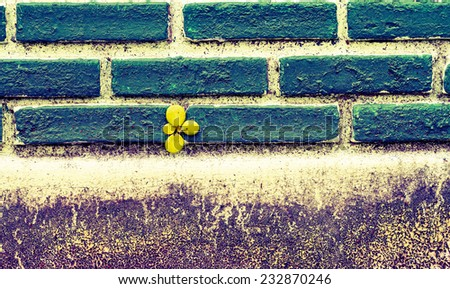 Vine growing on a green wall processed in vintage style - stock photo