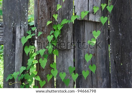 Heart Shaped Leaves Stock Images Royalty Free Images