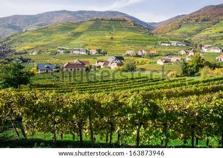 Vine Hills taken in Wachau, Lower Austria - stock photo
