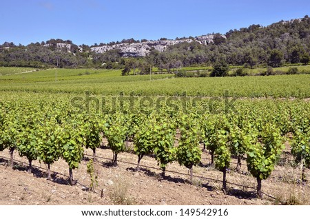 Vine near of Narbonne in southern France in the Languedoc-Roussillon region - stock photo